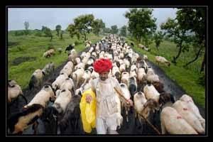 हठीलो राजस्थान-36 : राजस्थान का जनजीवन दोहों में