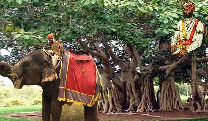 जब राजा बरगद के पेड़ पर जा बैठा था
