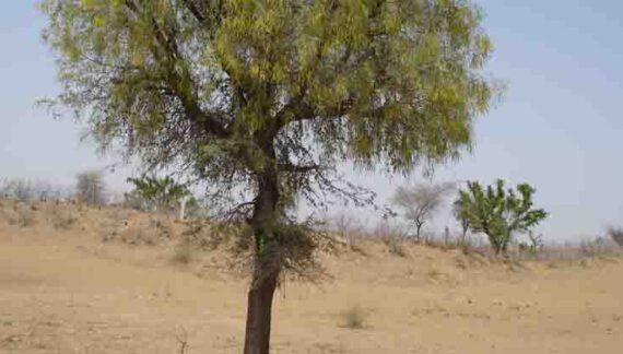 मायरा व भात भरने की परम्परा में भी जुड़ा है पर्यावरण प्रेम